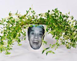 Herb Pot plant