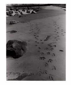 seagull footsteps